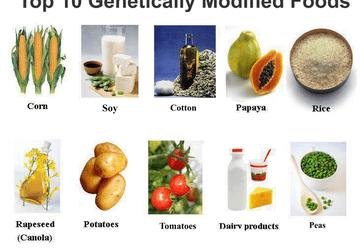 GMO FAQs